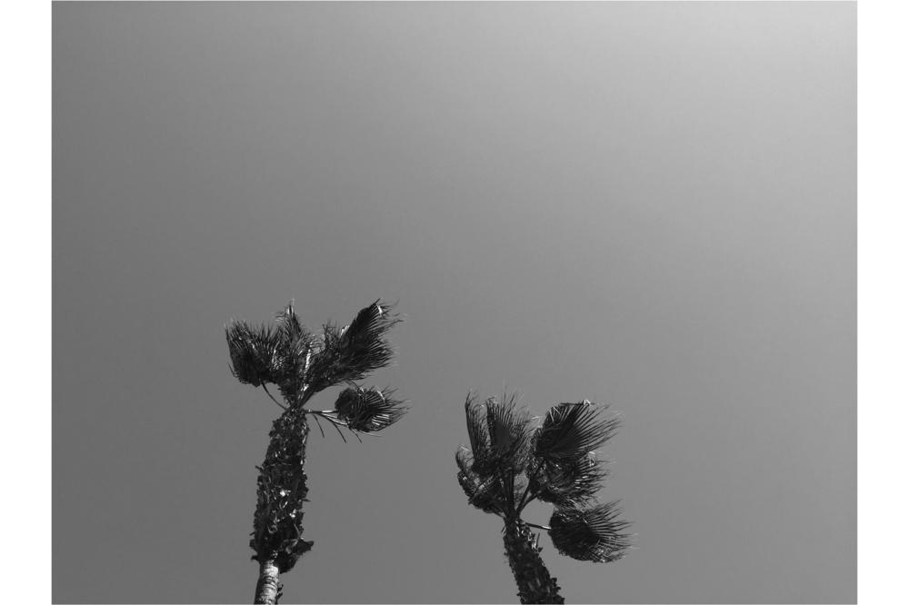palmtree_slideshow.png