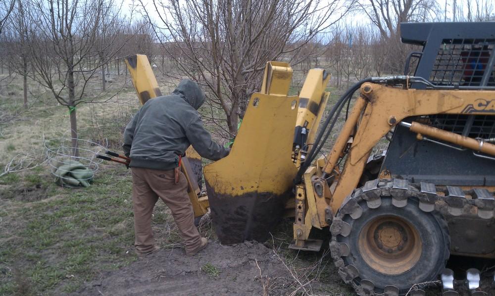 Spring Digging