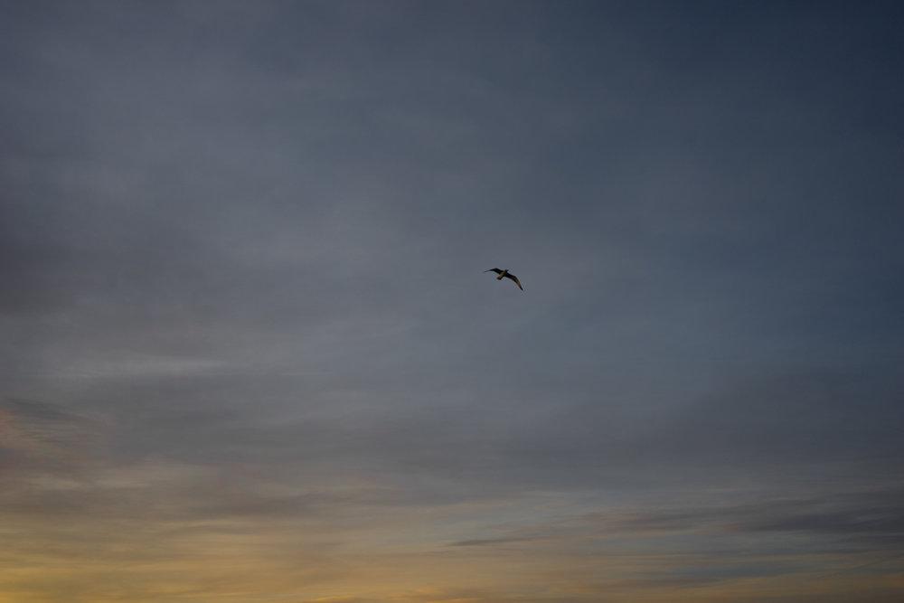 pájaro volando en la playa de las catedrales