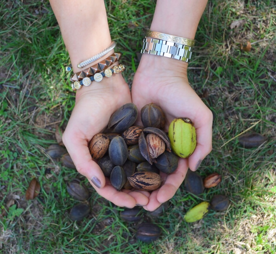 Assorted Gathered Pecans