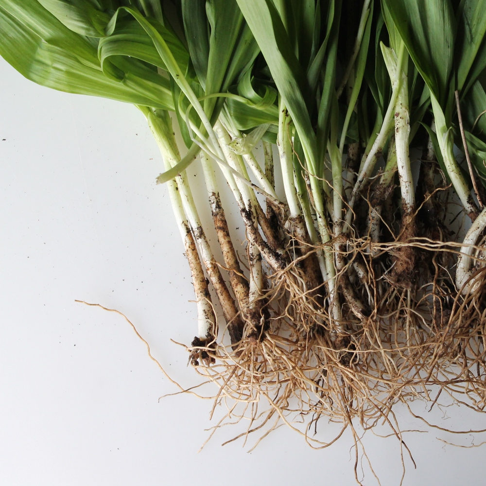 let's talk about: ramps
