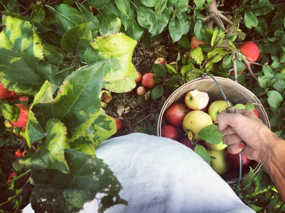 applewinner46.jpg