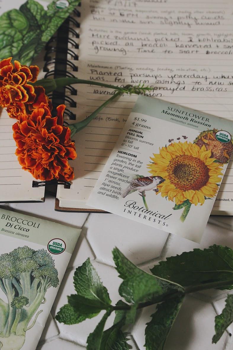 Planning a Fall Garden