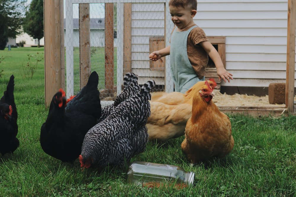 The Beauty of Keeping Chickens with Kids - Under A Tin Roof Blog