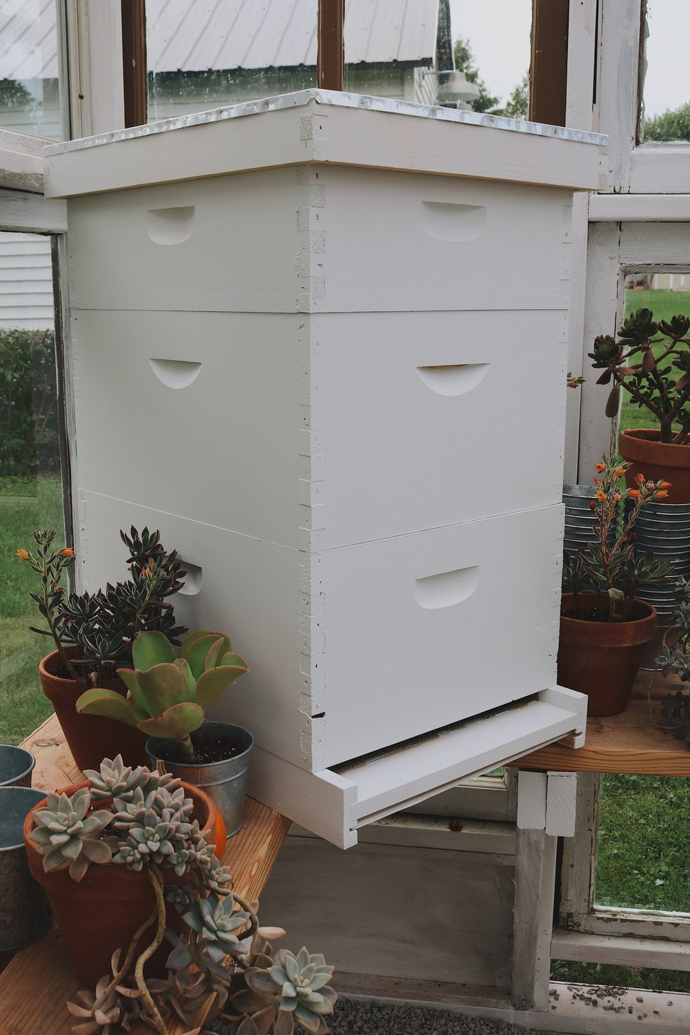 Returning to Our Roots | Beekeeping + Getting Started - Under A Tin Roof Blog