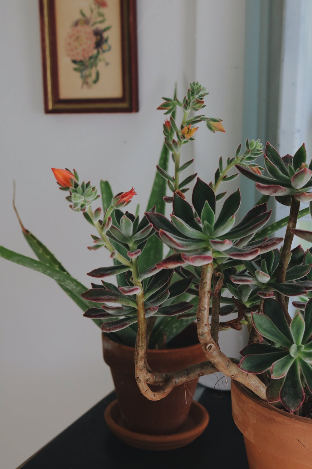 Succulent Care Simplified - Under A Tin Roof Blog