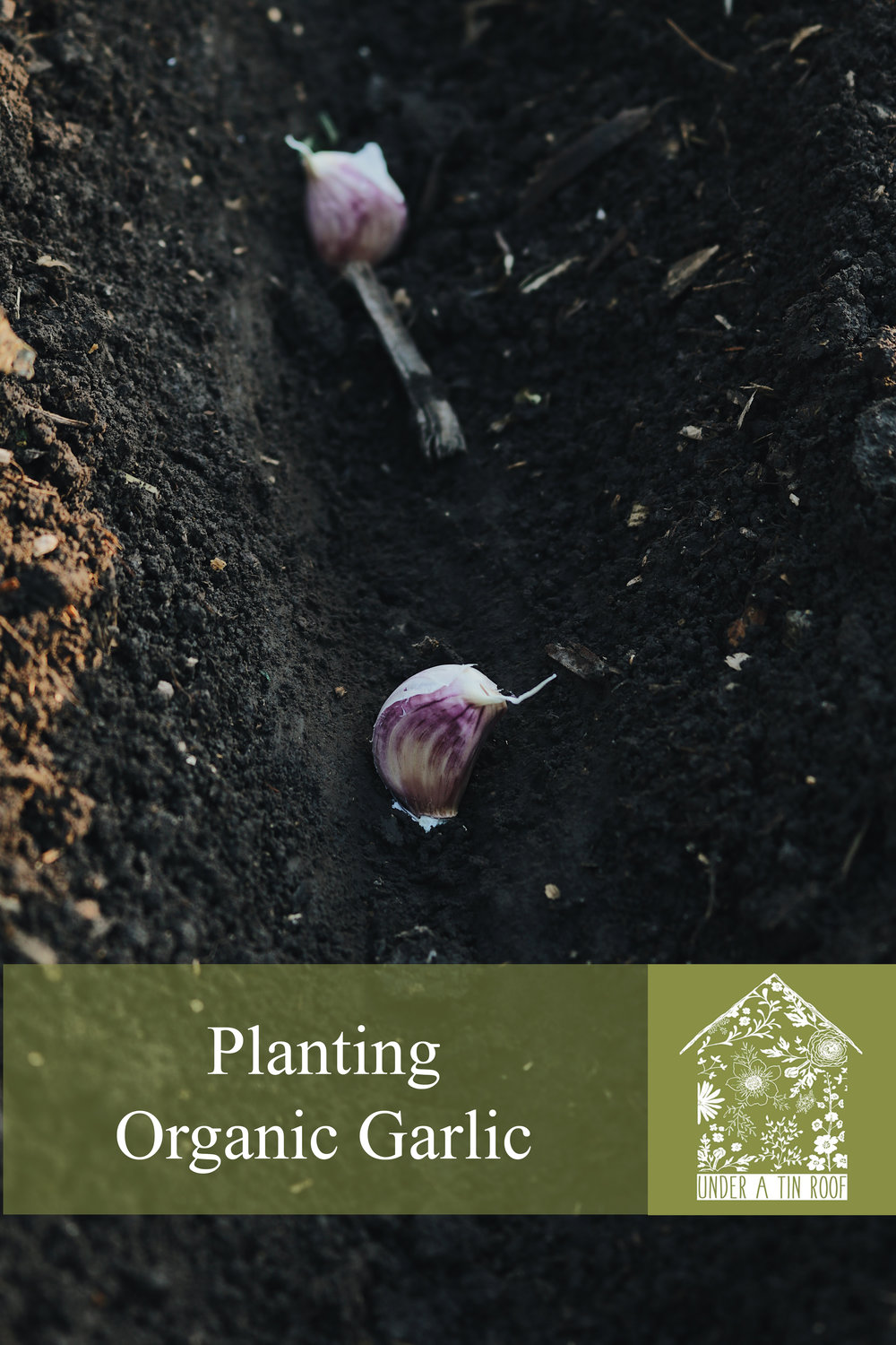 Returning to Our Roots | Planting Garlic - Under A Tin Roof Blog