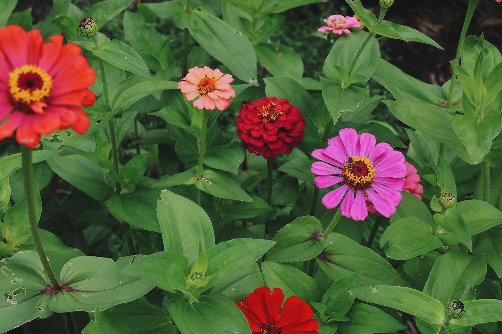 Autumn in the Garden | Recap 2017 - Under A Tin Roof Blog