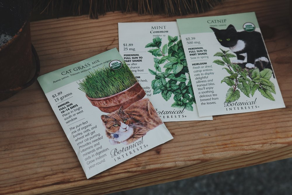 Returning to Our Roots | Growing Herbs for Cats - Under A Tin Roof Blog