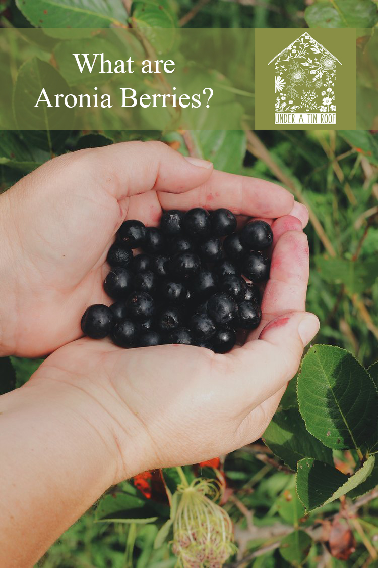 What are Aronia Berries? - Under A Tin Roof Blog