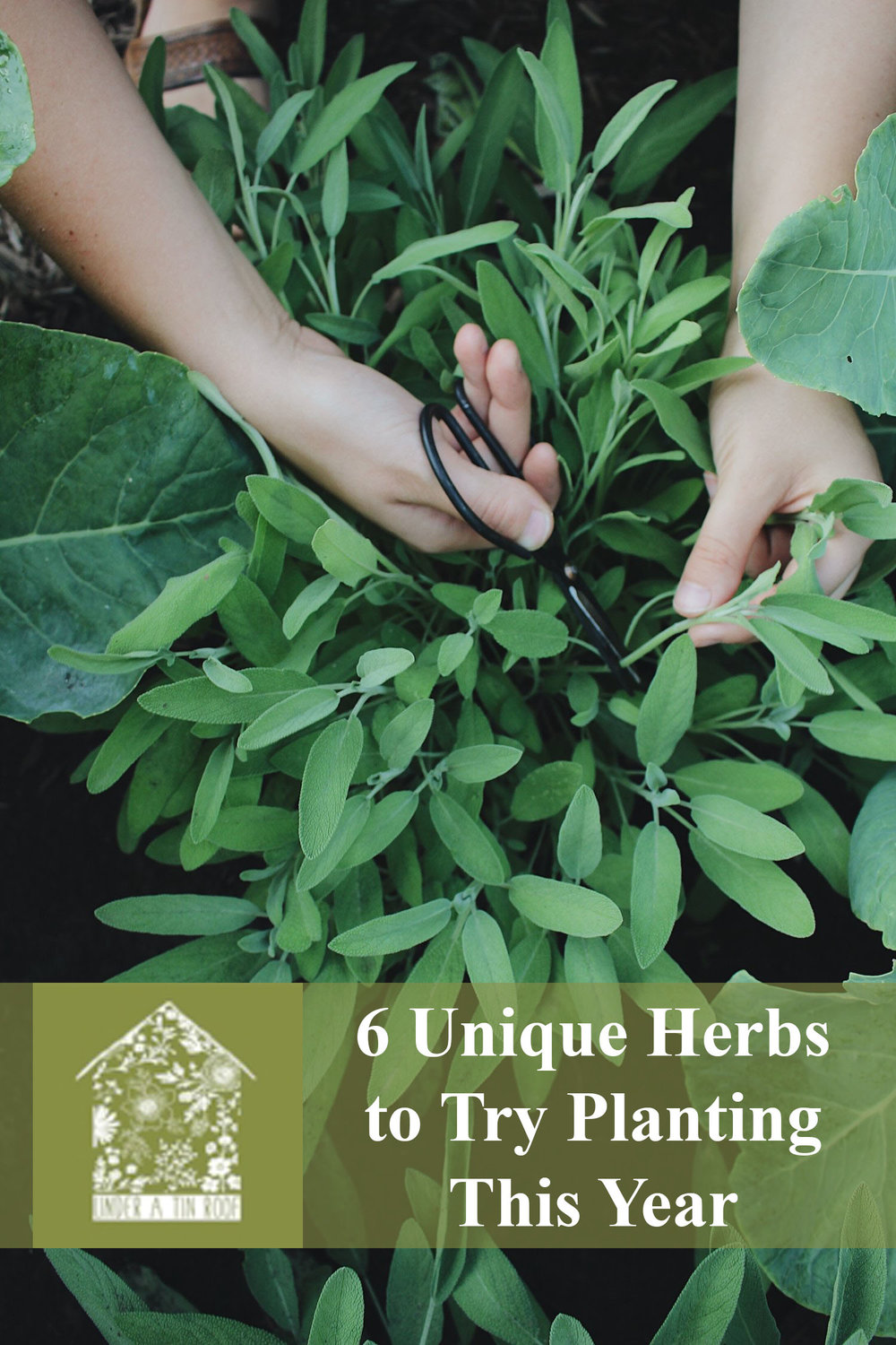 6 Unique Herbs to Try Growing This Year - Under A Tin Roof Blog