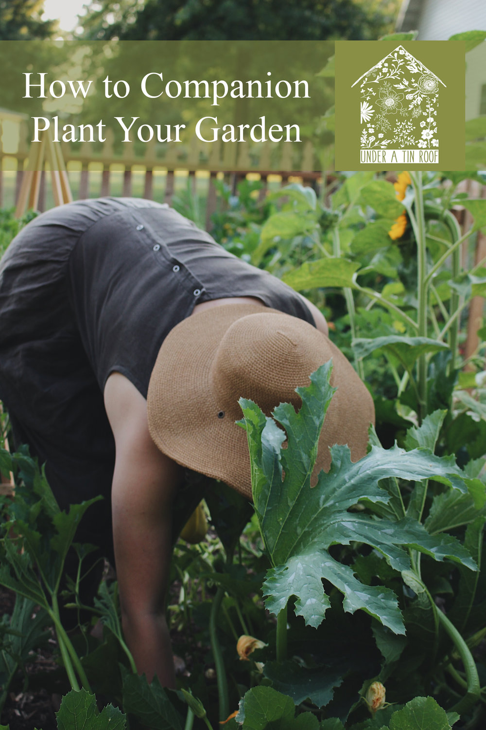 Companions or Antagonists? A Complete Guide to Companion Planting - Under A Tin Roof Blog