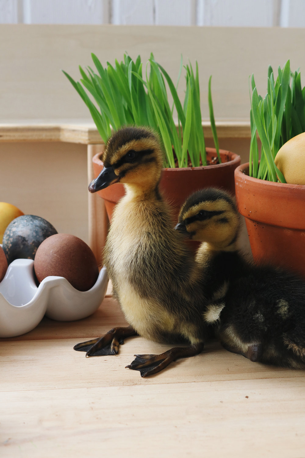 Grow Your Own Easter Grass - Under A Tin Roof Blog