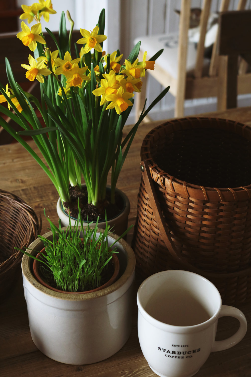 Signs of Spring Around the Farmhouse - Under A Tin Roof Blog