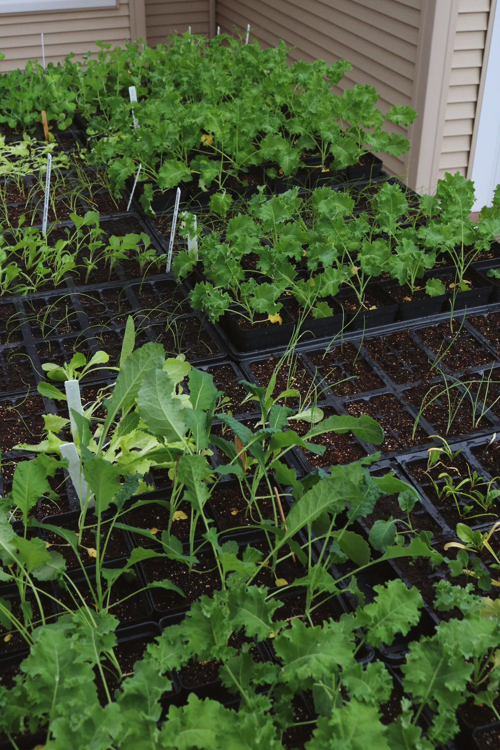 Garden Q + A:  How to Harden Off Plants - Under A Tin Roof Blog