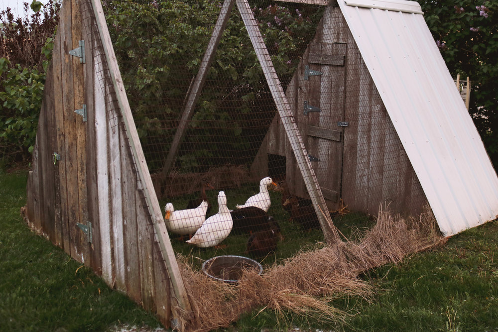 Homestead Update:  Almost Out of The Woods - Under A Tin Roof Blog