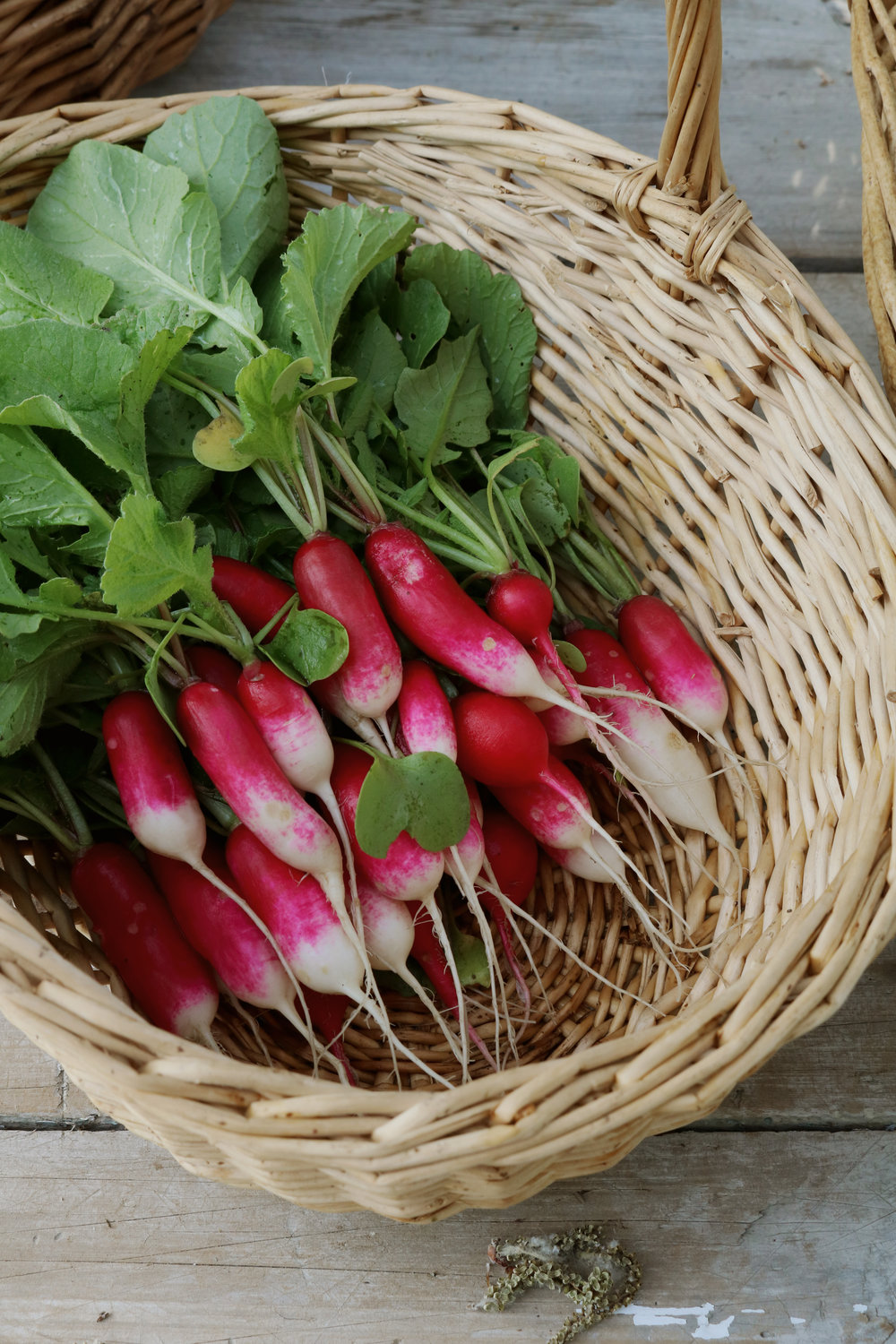 Our First Farmer's Market - Under A Tin Roof Blog