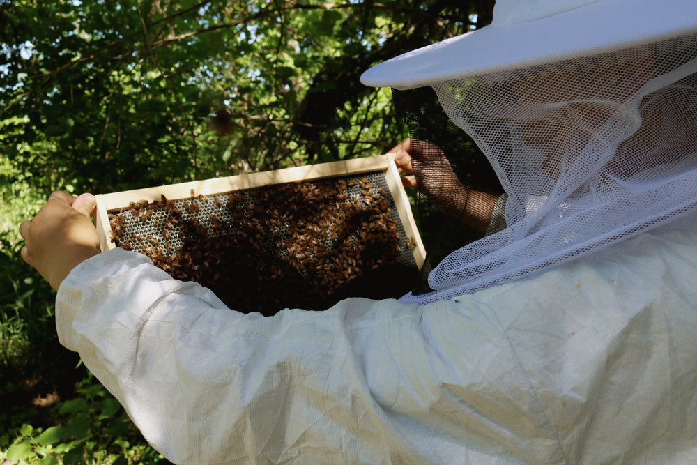 Bee-ing Honest About the Bees... First Week Check-In - Under A Tin Roof Blog