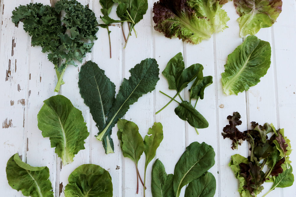 My Favorite Mixed Greens to Grow for Salads - Under A Tin Roof Blog