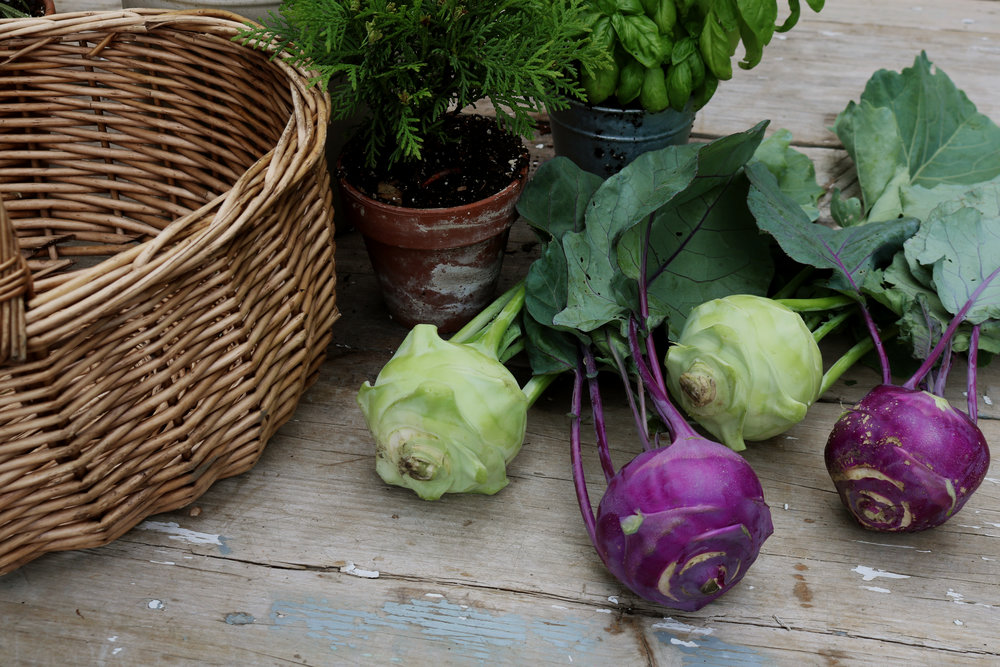 How to Harvest and Store Kohlrabi - Under A Tin Roof Blog