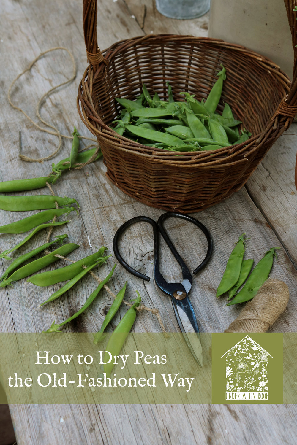 Drying Spent Peas the Old-Fashioned Way - Under A Tin Roof Blog