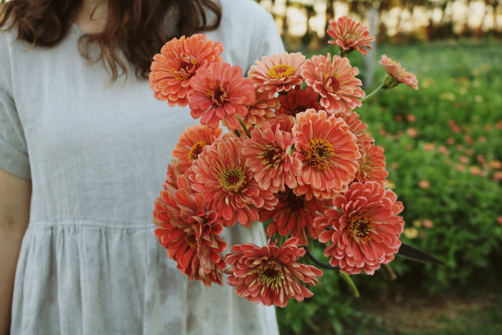 How to Grow and Harvest Zinnias - Under A Tin Roof Blog