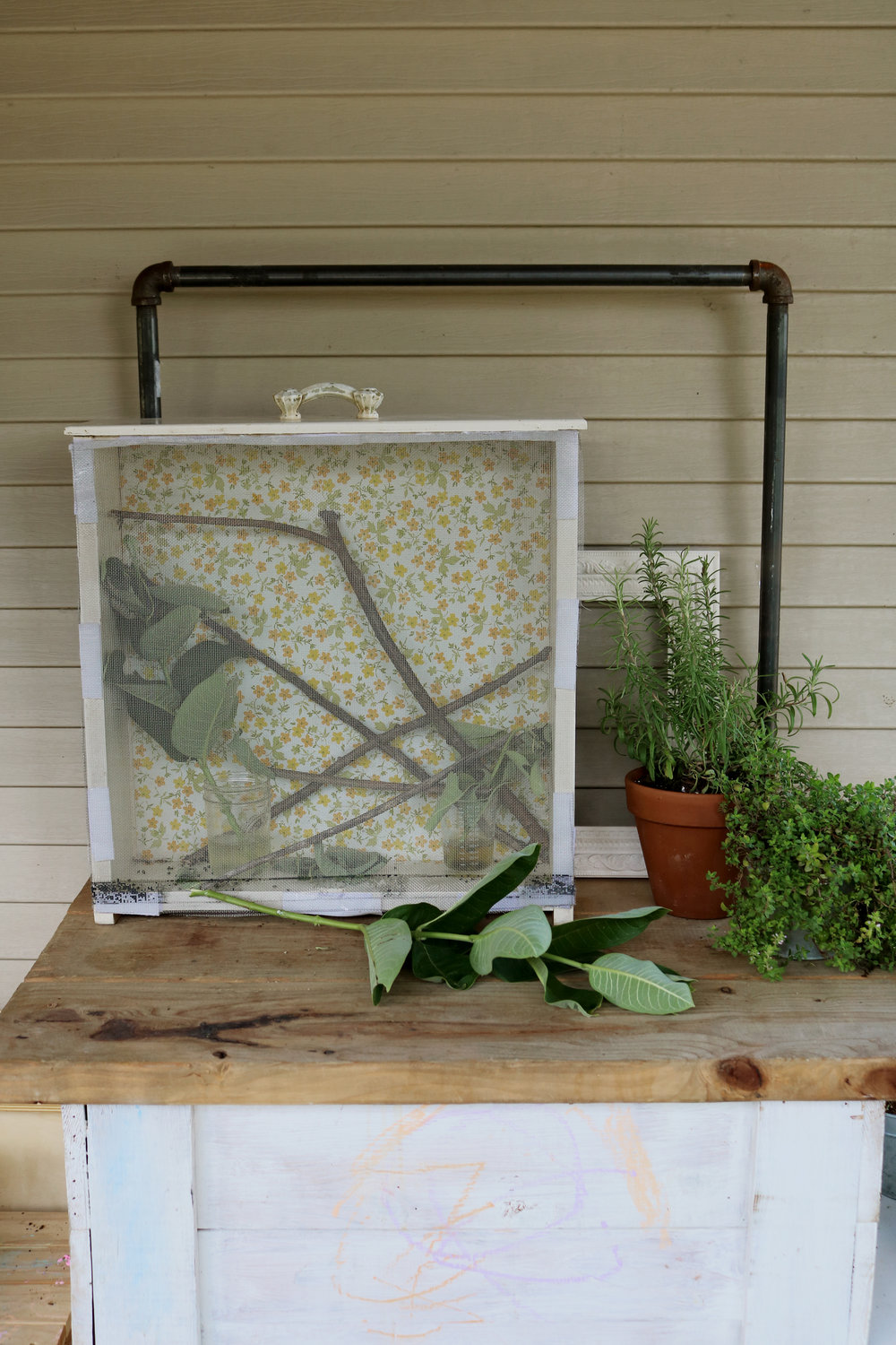 xDIY Monarch Habitat and Caring for Caterpillars - Under A Tin Roof Blog