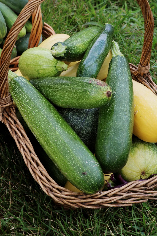 10 Tips for the Beginning Gardener - Under A Tin Roof Blog