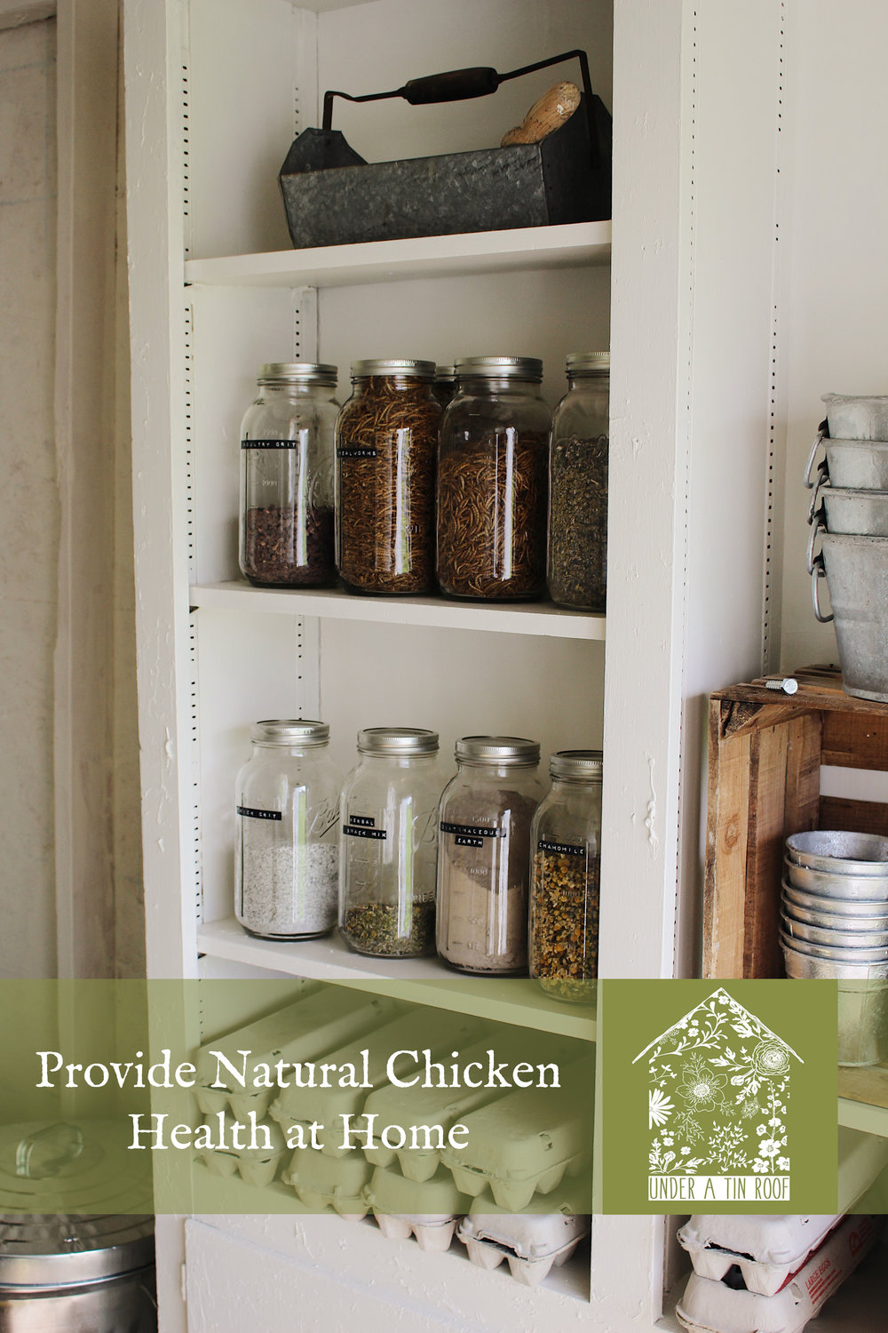 How to Naturally Promote Chicken Health at Home - Under A Tin Roof Blog
