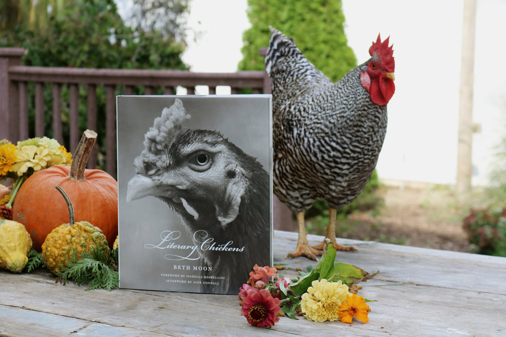 Literary Chickens | A Humble Book Review - Under A Tin Roof Blog
