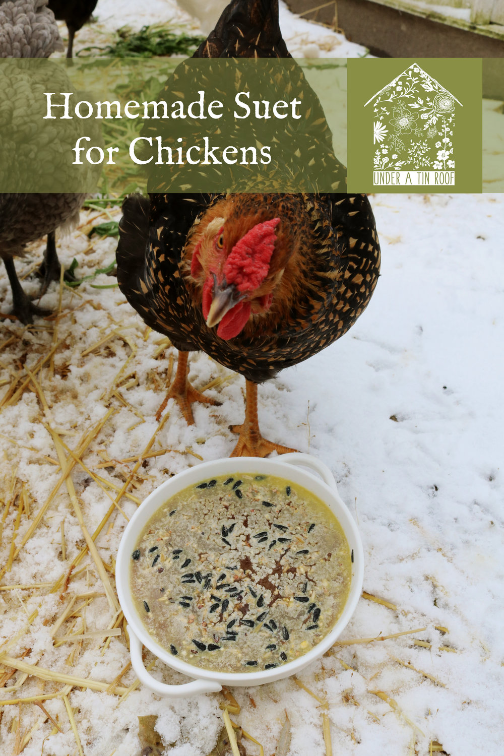 Homemade Suet Cakes for Chickens - Under A Tin Roof Blog