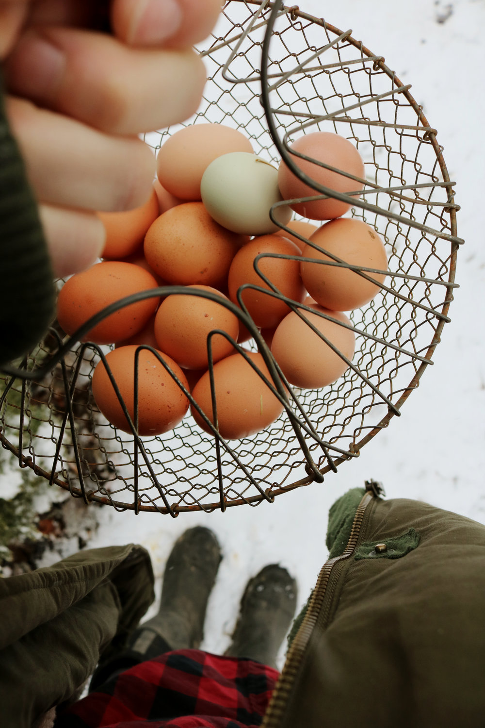 Fluke Eggs and What They Mean - Under A Tin Roof Blog