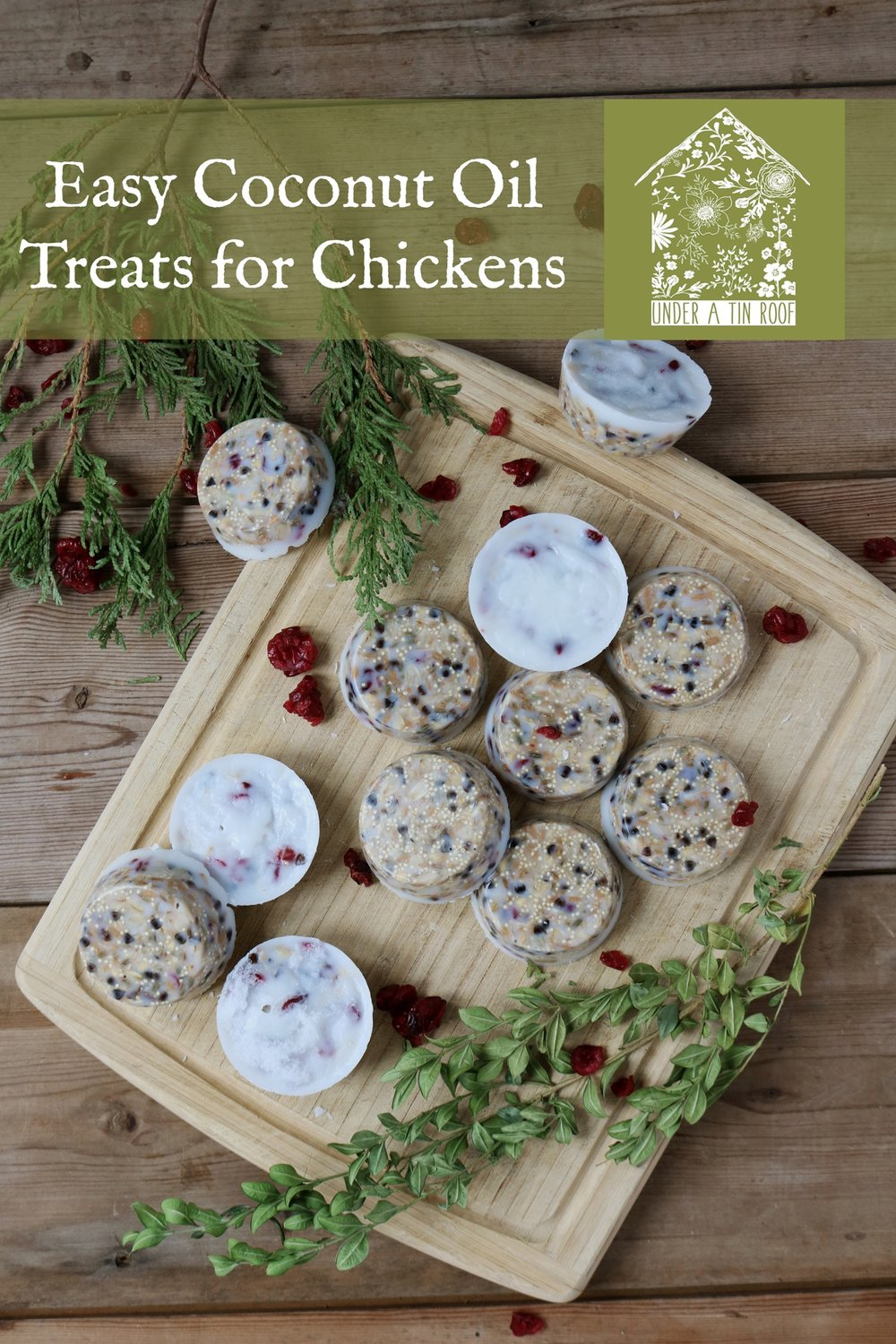 Easy Coconut Oil Treats for Chickens - Under A Tin Roof Blog