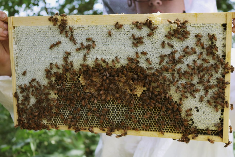 Why I Haven't Been Talking About Our Bees - Under A Tin Roof Blog