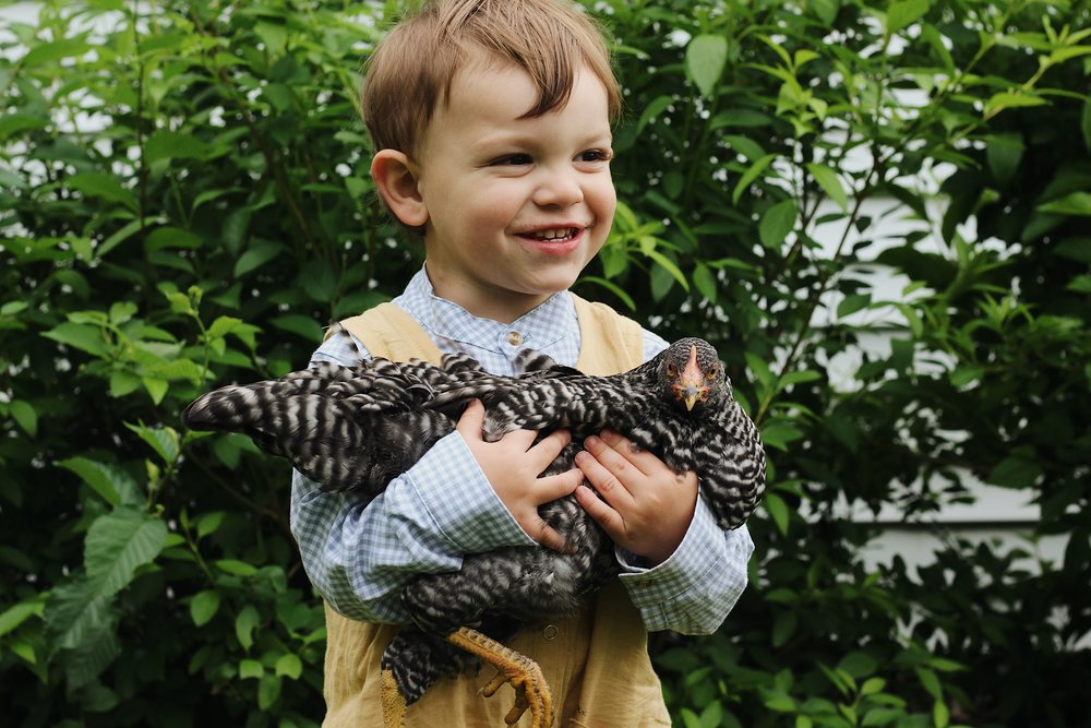 The Best Chicken Breeds for Kids - Under A Tin Roof Blog