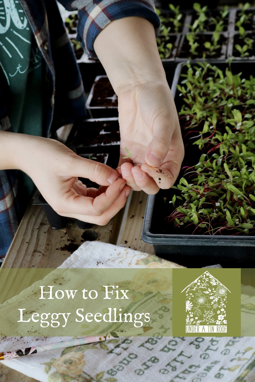 How to Fix Leggy Seedlings or The Art of Transplanting - Under A Tin Roof Blog