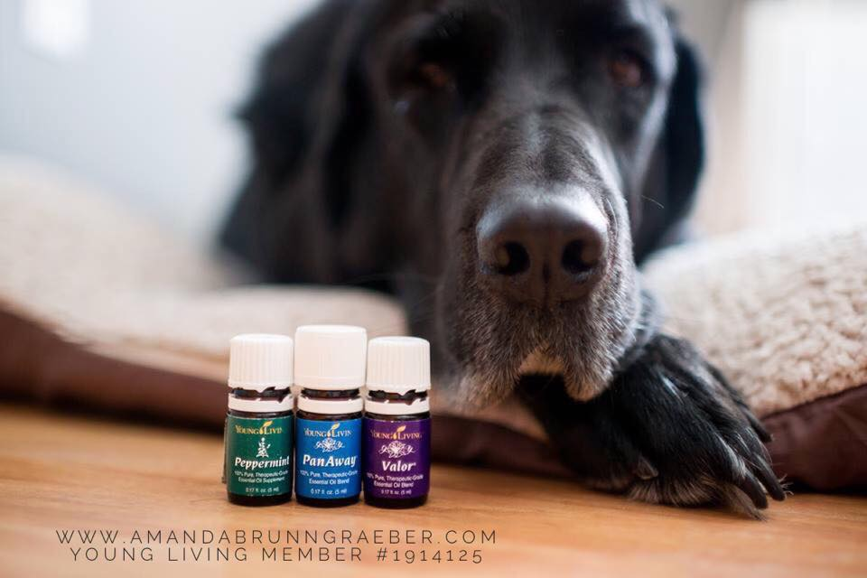 Young Living Essential Oils and our dog