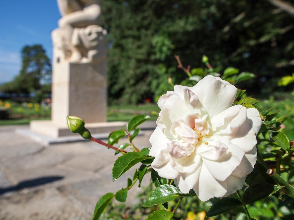 Roseraie du parc La Grange