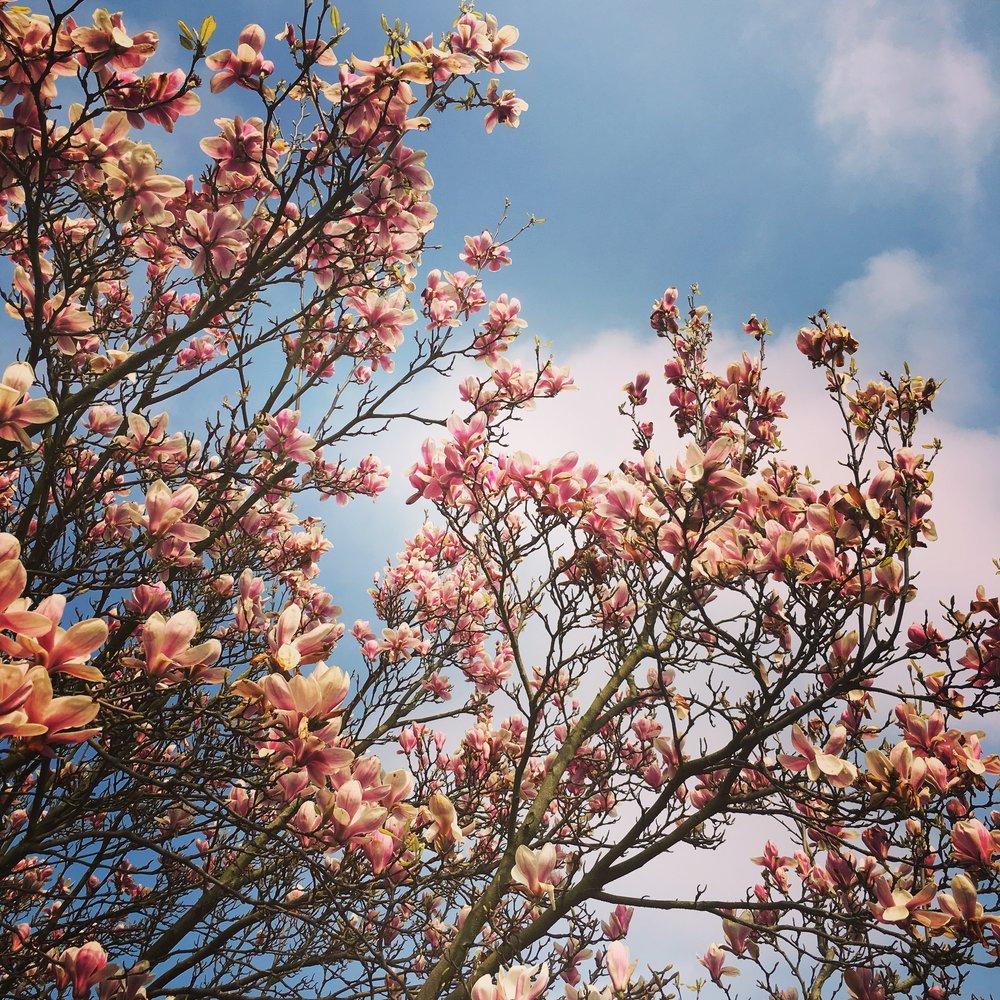 Magnolia. Not January, obvs.