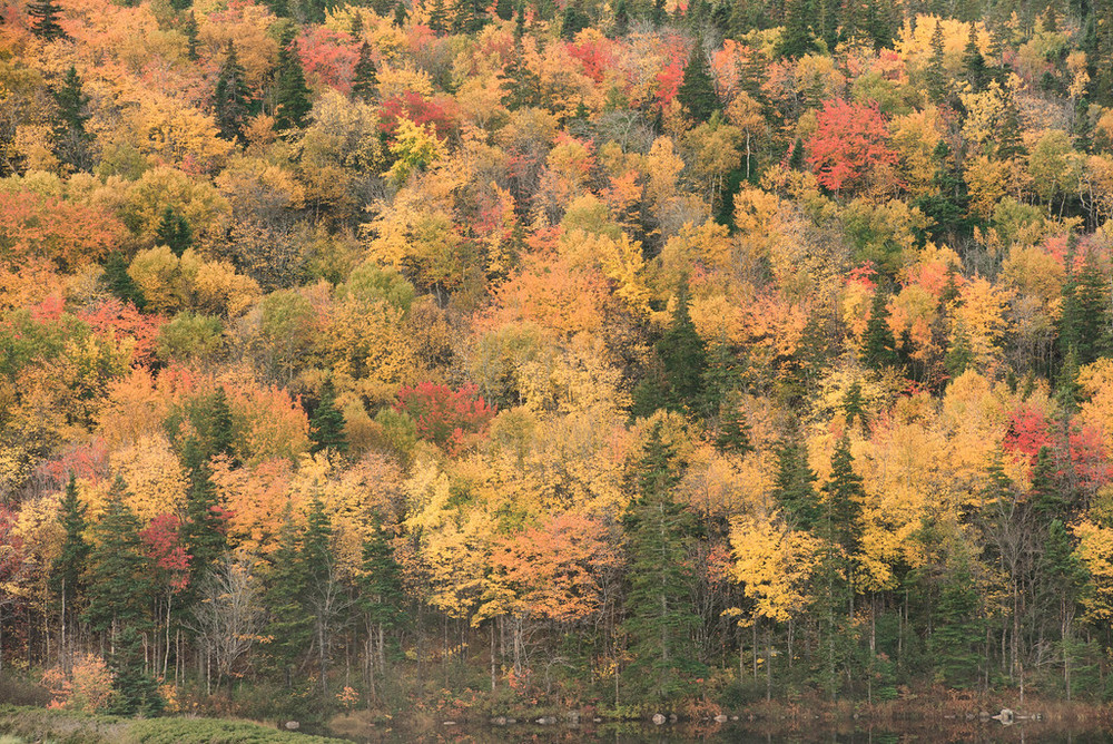 """Fall Colors Cape Breton NS"""