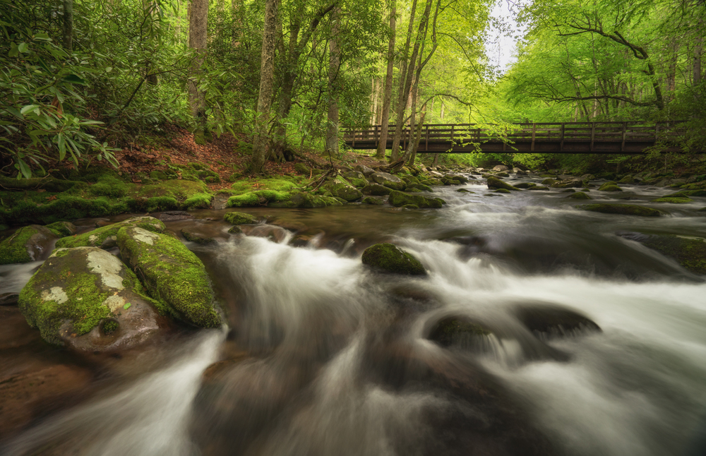 Oconaluftee River - Great Smoky Mountain National Park