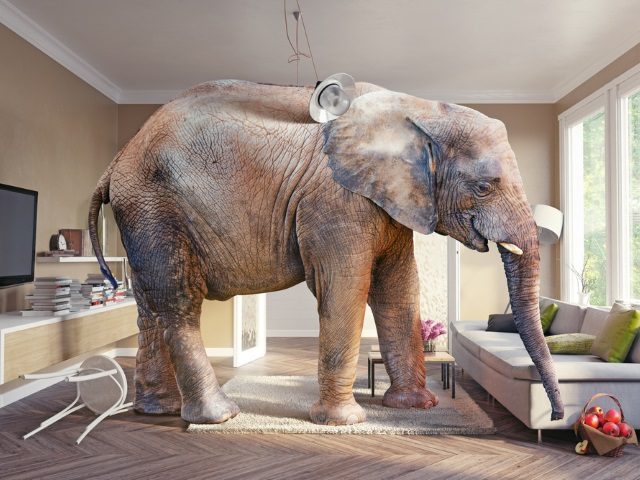 Facebooks Latest Blunder And The Elephant In Living Room