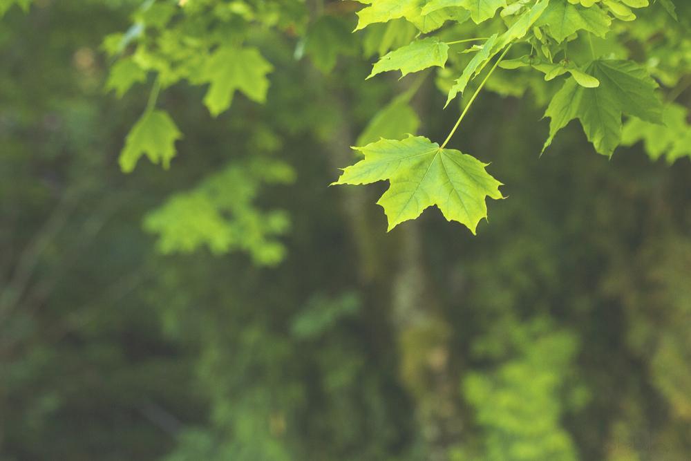 _MG_0902_crop_WM.jpg