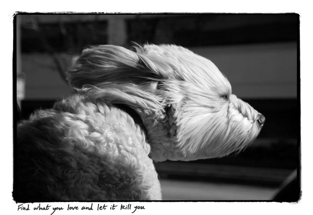 Dog_Print copy.jpg