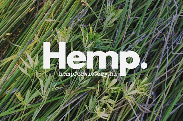Hemp For Victory NZ - A social awareness campaign established in 2014, on a mission to educate and cultivate awareness about hemp and all of its uses in New Zealand and around the world 💪🏼 www.hempforvictory.nz  #hemp #revolution #aotearoa #hempcommunity #hempwarriors #hempforvictory #hempforvictorynz