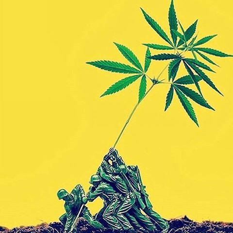 Hemp foods have just been declared legal for human consumption in Australia and New Zealand. The revolution is happening, now.  #educate #cultivate #liberate  #hempforvictory RG from @libertyhempco  #hemprevolution #hempflag #hempflag #hempmaterial #hempfibre #hempfood #hempoil #climatechange #endfossilfuel #hemparmy #hempforvictorynz