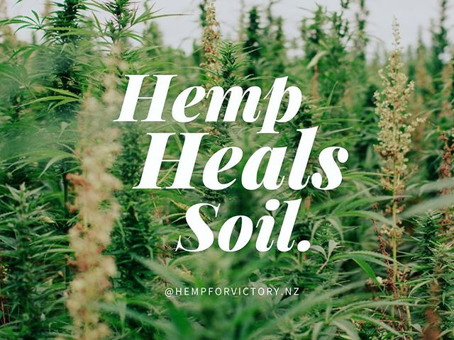 "HEMP HEALS 🌱 After the nuclear meltdown in Chernobyl of 1986, scientists found that the Cannabis sativa crop had the ability to mop up contaminants like radiation and heavy metals from the soil, even restoring nutrients to its base through a process called phytoremediation.  Dr Masaru Emoto the late Japanese author of #themiracleofwater said ""Plant a lot of hemp in the land of Fukushima. Hemp is prohibited in almost all places in the world, but I am supporting the movement for hemp to revive… I think it has the…potentiality to purify the environment… I believe hemp fields will bring the eradication effect… So, I would like to cooperate with people around the world so that we can advocate a hemp revival globally."" With the current state of our lands and rivers across the world, there has never been a more important time to revive the miracle uses of this ancient crop.  #growhemp #hempforvictory"