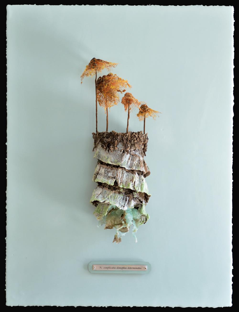 zapporangemushroom.jpg