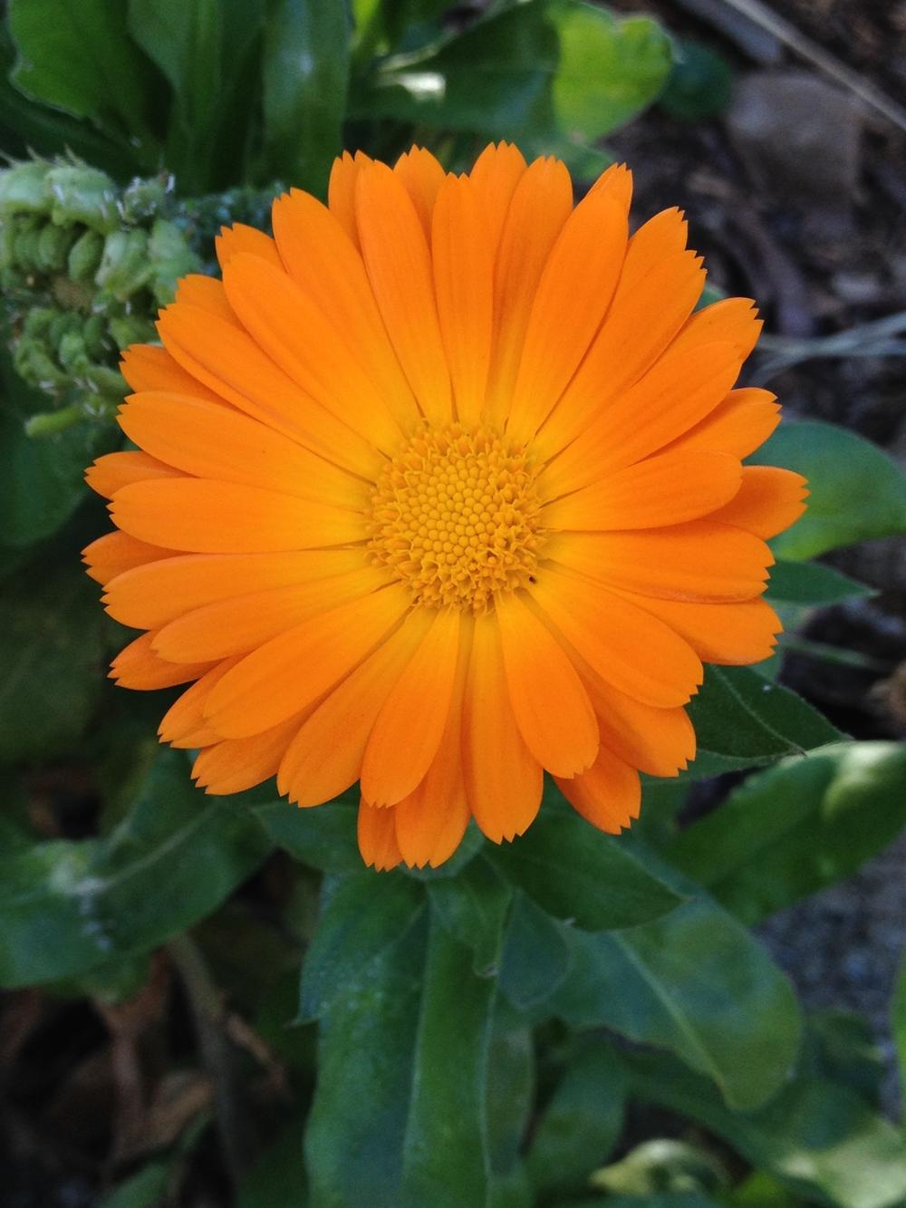 little orange flower