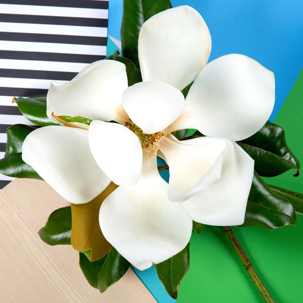 Desktop Florals 2.jpg